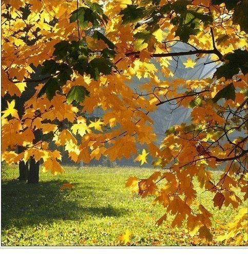 Золото листвы осенней - текст для песни