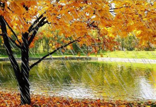 Осень. сыро. неба слёзы