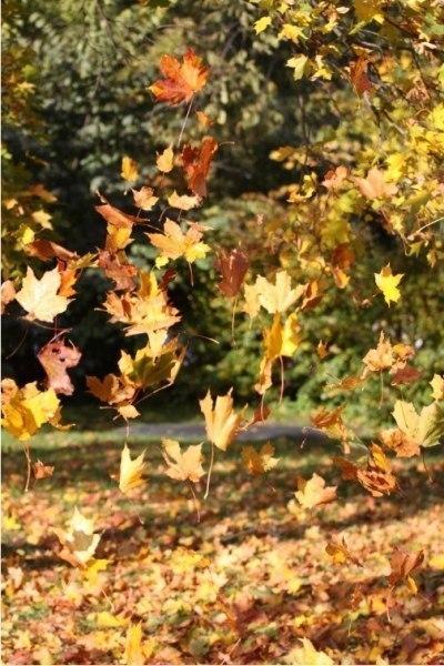 Осенний вальс - музыка Владислава Кандалова, исполняет Лидия Роткевич