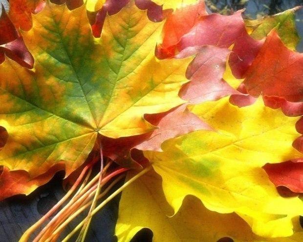 Золото листвы осенней - исполняет Эдуард Струсберг