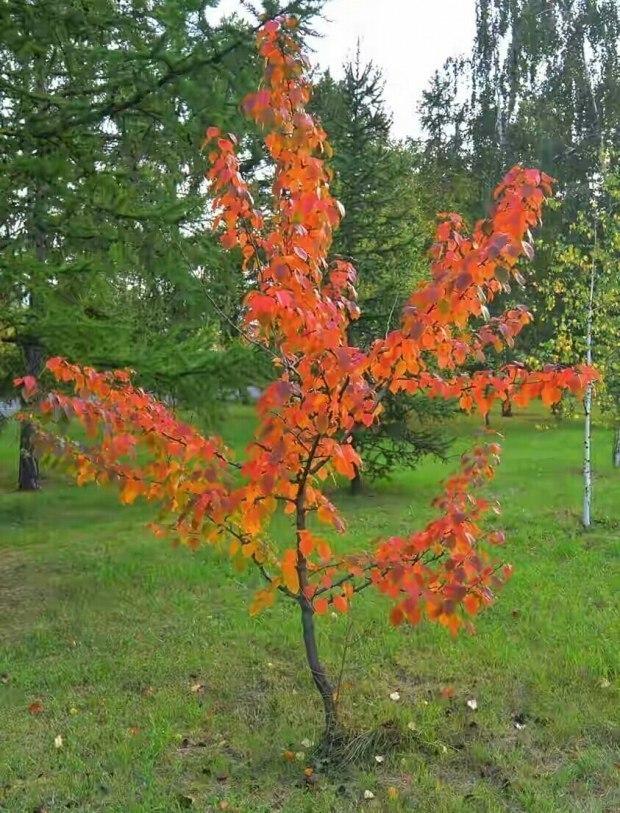Эта осень - не наша