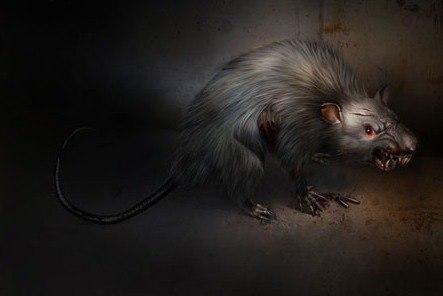 Седая крыса