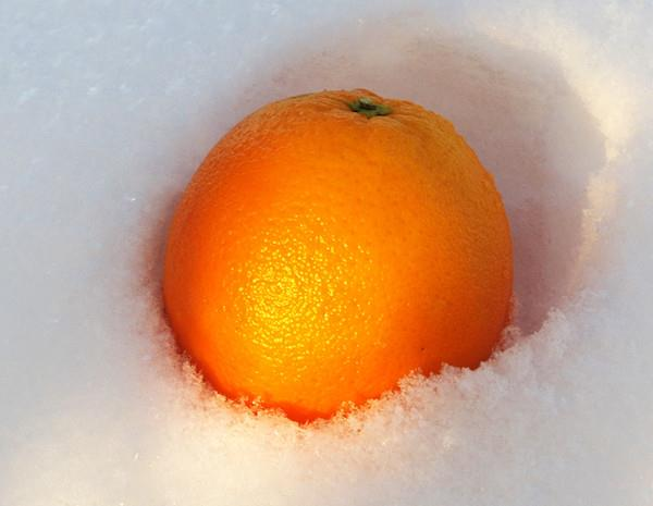 картинки апельсины на снегу царей