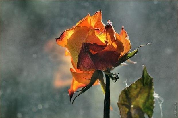 Засохший цветок