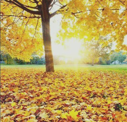 Бархат пожухлый опавшей листвы