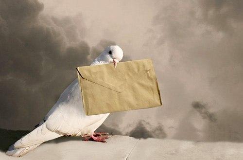 Прилетел с письмом почтовый голубь...