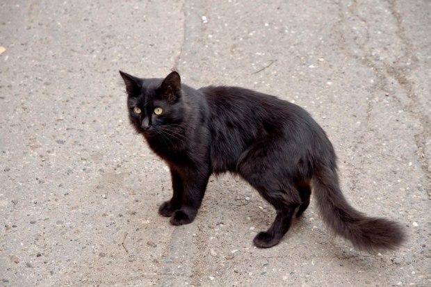 Любимый кот моей любимой кошки