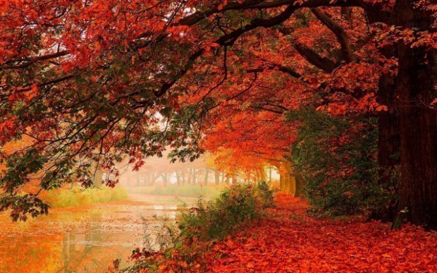 Осеннее наваждение
