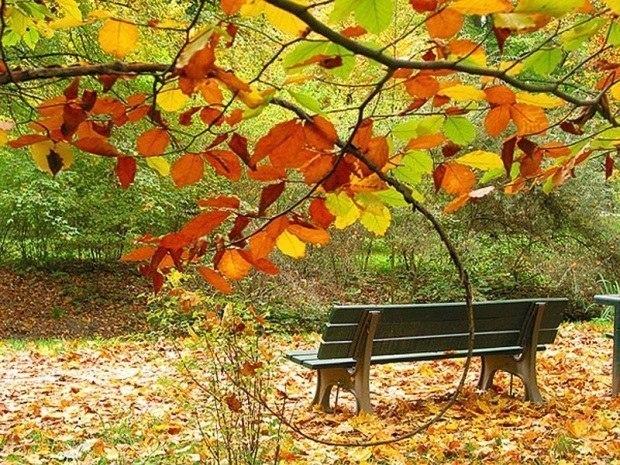 Золото листвы - исполняет Андрей Оршуляк