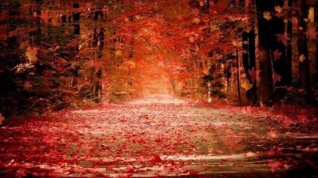 Шумит листопад