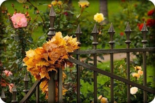 Осень в двери стучит осторожно