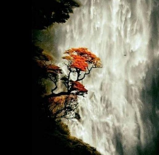 Рыжие пряди осенней печали