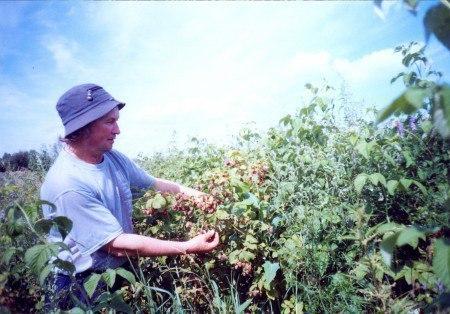 Приветливая ягода малина Рубиновыми каплями блестит В лесу, где меж берёз растёт осина, Черёмуха листвою шелестит.