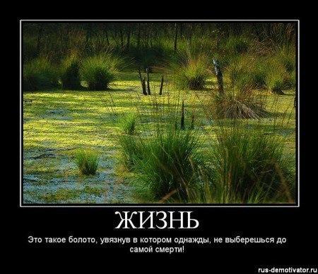 На вечной войне Болото... болото - куда не взгляни