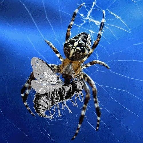 зачем пауки ловят мух