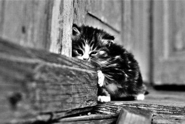 Брошенному котенку