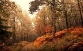 Покой Вселенский, это лес