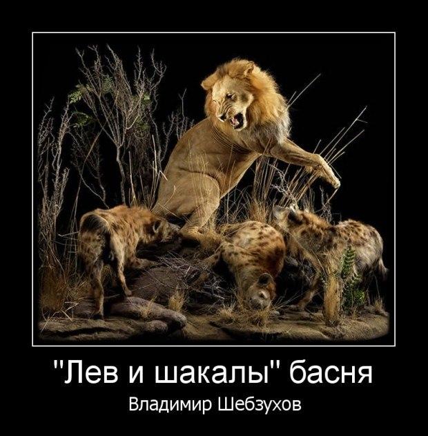 Лев и шакалы