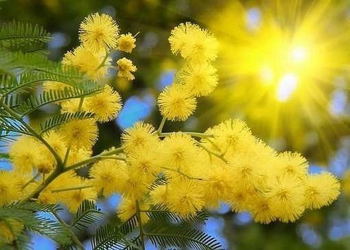 Солнце на ветке