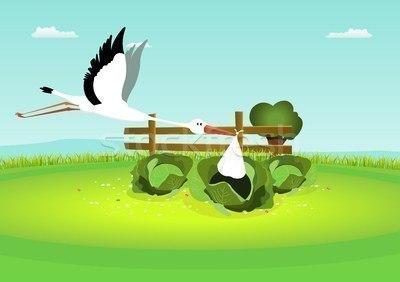 Аист белый летит в капусту
