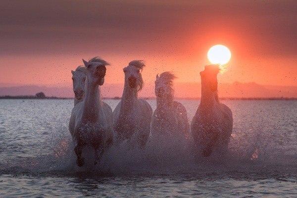 Мертві вершники, білі коні