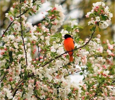 Скачать песню 8 день весны