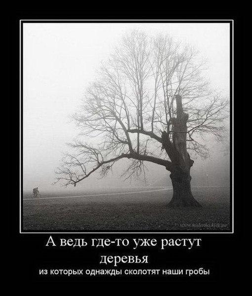 О чем думает дерево?