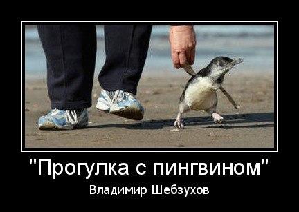Прогулка с пингвином
