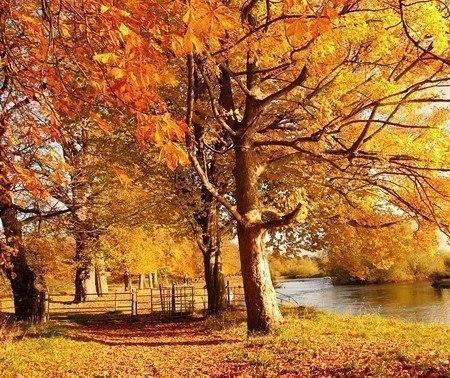 Ах, осень!
