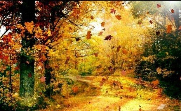 Самая прекрасная пора - осень